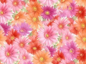 Colorful Flower Background for Powerpoint