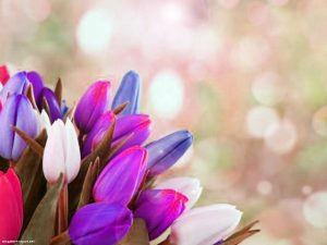 Colorful Tulip Background