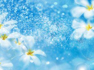 Fresh White Flower Background