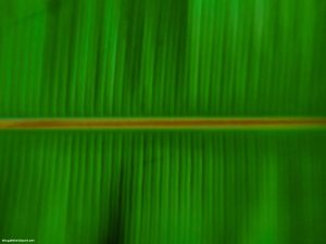 Green Banana Leaf Powerpoint Background