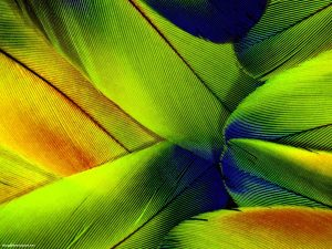 Green Feather HDR Background for Powerpoint