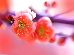 Red And Purple Flower Powerpoint Background