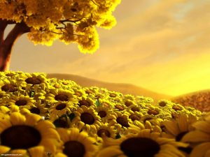Sunflower 3D Background