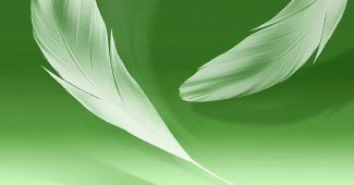 White Feather Green Background